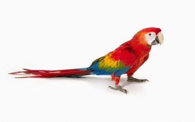 Créateur ou perroquet ?