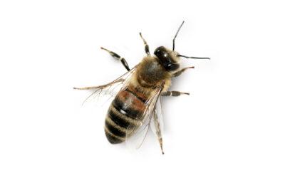 Cross-Pollination ou Pollinisation, l'innovation de l'adjacence